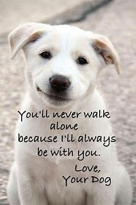 Best Dog Quotes - ideas and images on Bing   Find what you ...