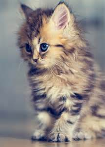 cutest cats in the world top 30 cat pictures of all time soupoffun