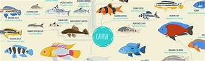 Tropical Fish: List of Species [Infographic]