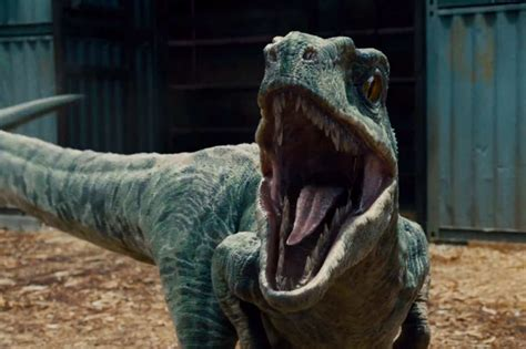 Top Three Reasons Why Dino 6 Reasons Why Jurassic Is A Banger 5why