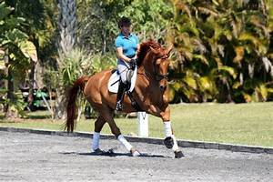 348 best images about Classical Dressage on Pinterest ...