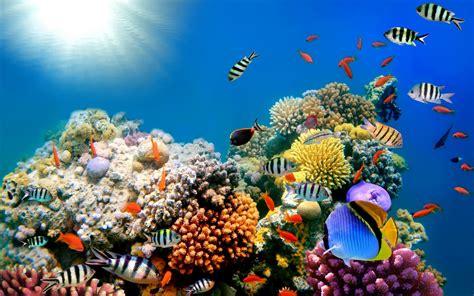 Riff Meer Meer Unterwasser-hochauflösende HD-Desktop ...