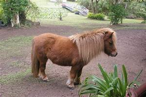 Mini Mates Miniature Horse Farm - Domesblissity