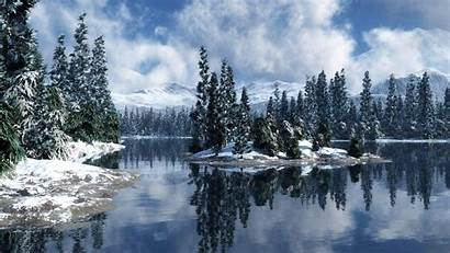 Magical Wallpapers Forest Winter