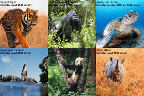 endangered species   pixel represents