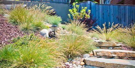 plants for hillside erosion hillside erosion control landscaping network