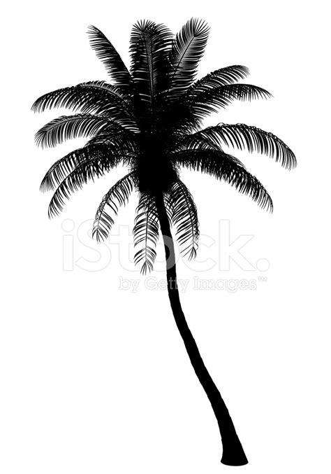 palm tree clipart black and white no background silhouette de cocotier isol 233 sur fond blanc photos
