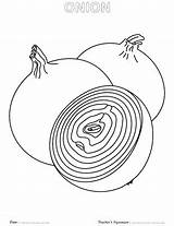 Onion Coloring Pages Sheet Onions Template Green Getdrawings Cp sketch template