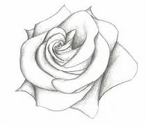 simple-pencil-drawings-of-flowers-rose-drawing-simple-related-keywords      Simple Drawing In Pencil