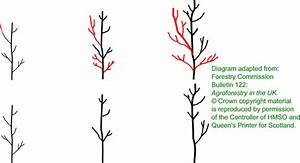 Silvopastoral Agroforestry Toolbox