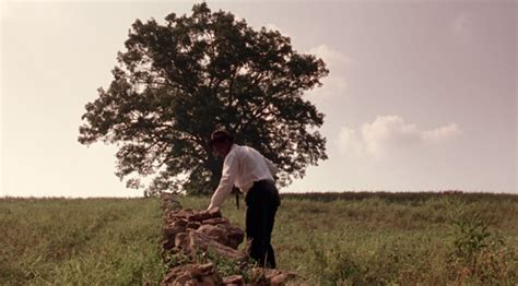famous shawshank redemption oak tree falls