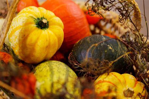 pumpkin autumn harvest free stock photo public domain