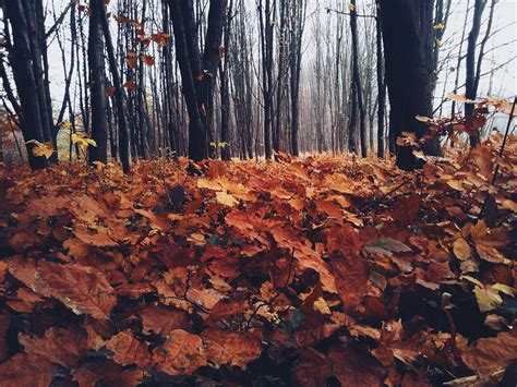 Autumn Wallpapers Cozy by Cozy Autumn Evenings