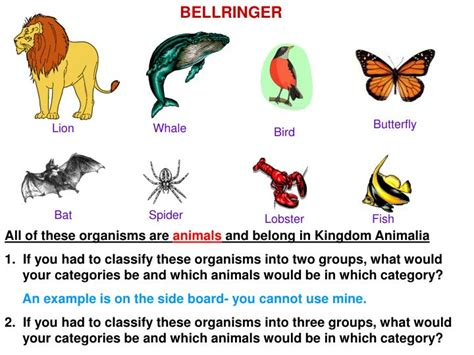 organisms  animals  belong