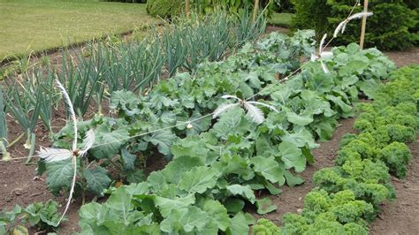 fall vegetable garden versatile vegetables for fall gardening indiana yard and
