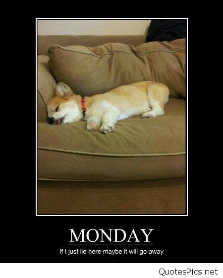 Funny Memes About Monday - monday puppy meme www imgkid com the image kid has it