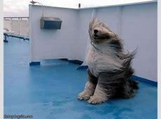 Very Windy funnydogsitecom