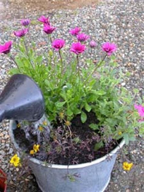 cuisine d exposition composer une jardinière d 39 été pour fleurir un balcon