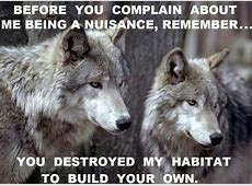 wolf wisdom Motivational Quotes Wallpapers and Images