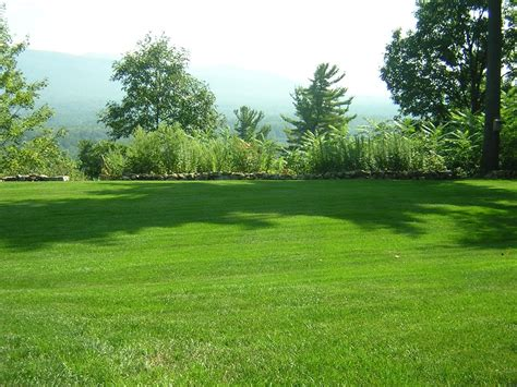 Choosing The Right Turf Grass For Your Lawn
