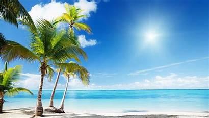 Beach Sand Water Coconut Sunny Trees Near