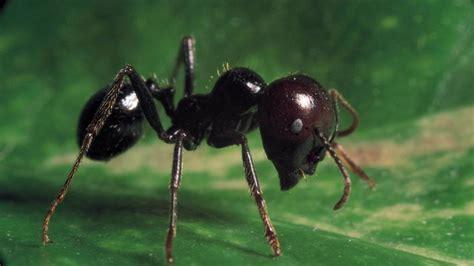 was fressen ameisen afrikanische savanne ameisen sch 252 tzen b 228 ume vor elefanten spiegel