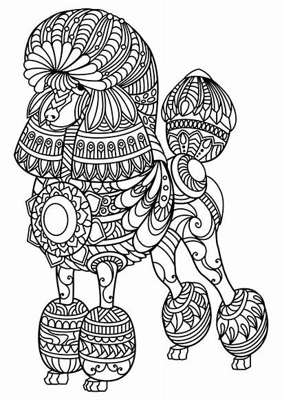 Dog Poodle Coloring Dogs Complex Patterns Pages