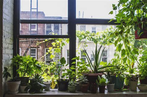 Indoor Windowsill Garden by 4 Tips For Setting Up A Windowsill Garden Modern Farmer