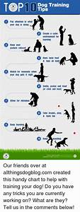 Dog Training Chart