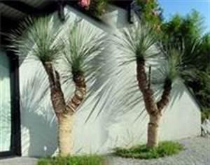 Palmen Für Den Garten : winterharte palmen f r den garten ~ Sanjose-hotels-ca.com Haus und Dekorationen