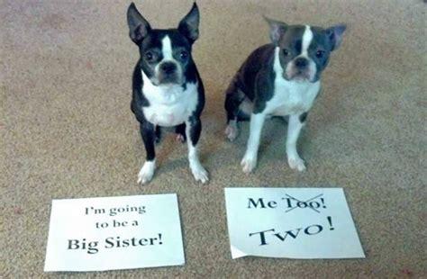 creative ways  announce  twin pregnancy