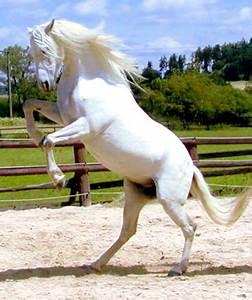 Paarden -- van monika koning bij Imonline nl!
