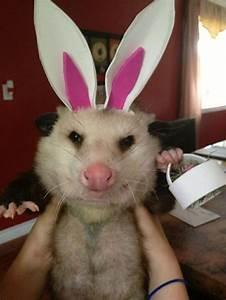 Easter Possum | Smile stuff | Pinterest