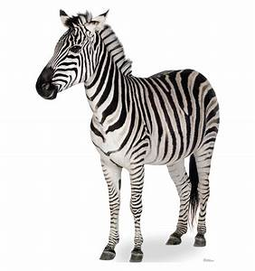 What's the difference between a zebra and a human? - Train