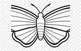 Moth Luna Coloring Colouring Clipart Sheet sketch template