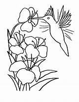 Hummingbird Coloring Printable Flores Para Dibujos Colibri Pintar Imagen sketch template