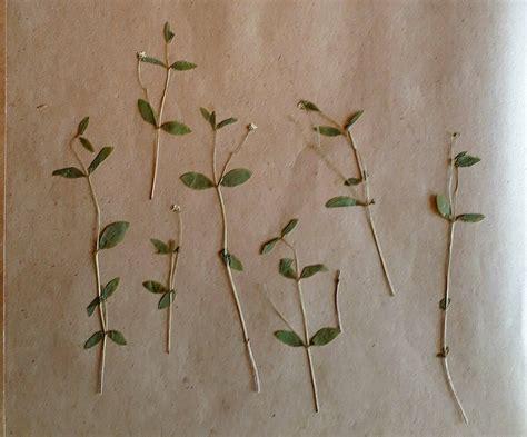 Pēc 84 gadiem atklāj izzudušu augu