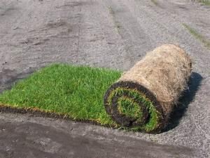 Rouleau Gazon Naturel : code fiche produit 4266229 ~ Melissatoandfro.com Idées de Décoration