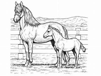 Coloring Pages Horse Children Horses Printable Foal