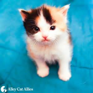 alley cat allies alley cat allies 2016 2017 calendar cats