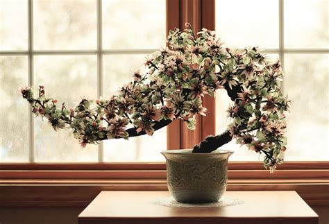 Bonsai Per Interni Come Coltivare Un Bonsai E Imparare L Arte Ibonsai
