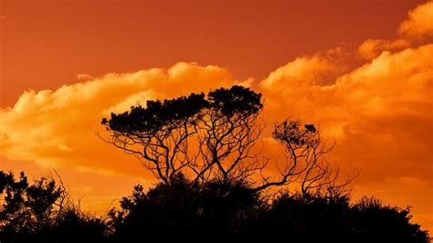 trees branches sunset  photo  pixabay