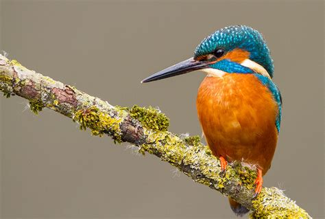 Kingfisher Boats Falmouth Cornwall the wildlife helford river cruises