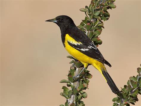 17 best images about bird life list on pinterest san