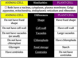 Biology Is Fun Biology Notes