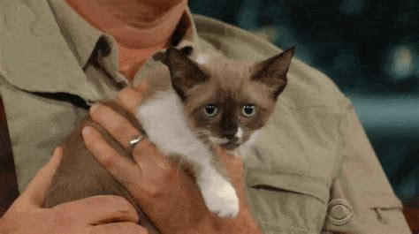 reason  cats talking     meow cats