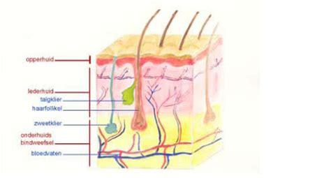 Hyaluronzuur huid