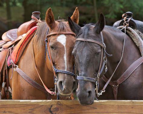 riding horseback asheville places horse