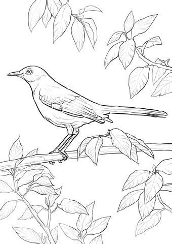 Northern Mockingbird coloring page Free Printable
