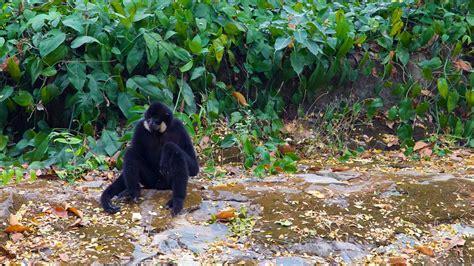 Botanischer Garten Saigon by Zoo Und Botanischer Garten Saigon In Ho Chi Minh Stadt